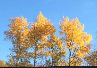 Fall4 10-23-15